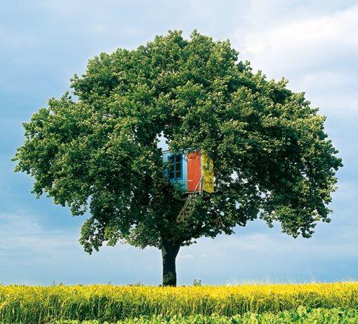 Hus i træ